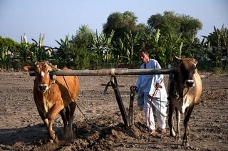 Blog Farmer