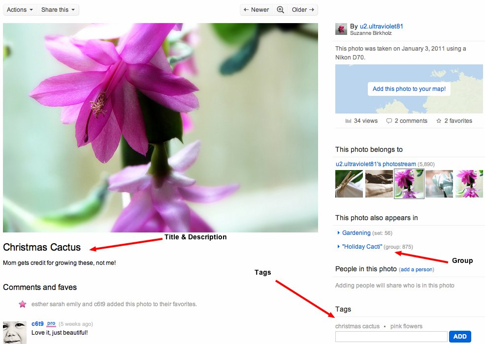 Flickr to Market Your Business