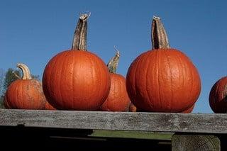 inbound marketing pumpkins